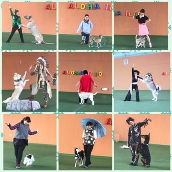 trainingshow20190328.JPG